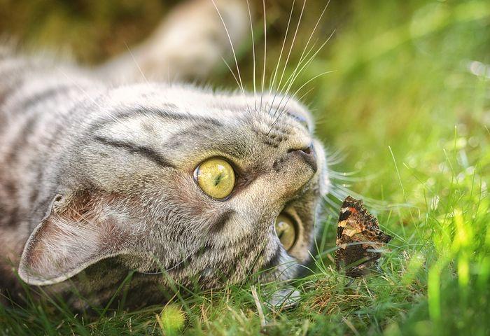 「好奇心」は学力、経済力を伸ばす。「自然との触れ合い」が一番「好奇心」を育てる。